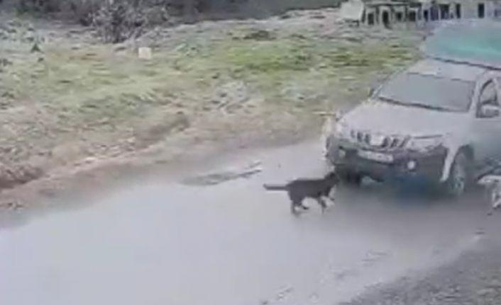 Pendik'te köpeği ezdi geçti.