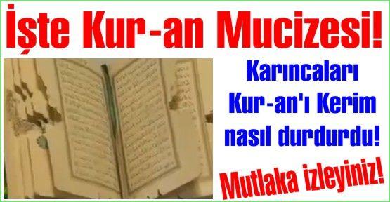 İşte Kur-an Mucizesi. Karıncaları Kur-an'ı Kerim nasıl durdurdu! Mutlaka izleyiniz.