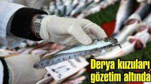 Yerli, Milli ve Şuurlu Gençlik projesi, Türkiye ikincisi