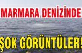 Heybeli Ada'da şok görüntüler! Marmara Denizi işte böyle kirletiliyor