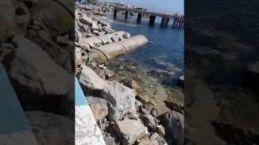 Sahipsiz İstanbul'da kaderine terk edilmiş Zehirli İskele