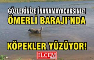 İstanbullular Köpeklerin yüzdüğü suyu mu içiyorlar?