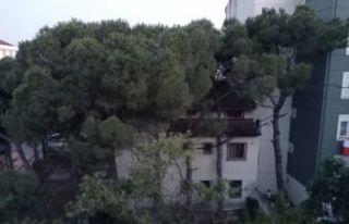 Kartal'da 100 Yıllık Çam ağaçlarını katlettiler.