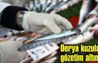 Yerli, Milli ve Şuurlu Gençlik projesi, Türkiye...